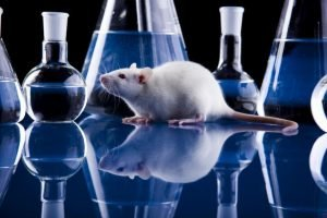 new-technology-may-obviate-need-animal-testing