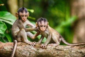 monkey-2501201_1920