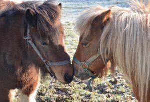 ponies-3180405_1920